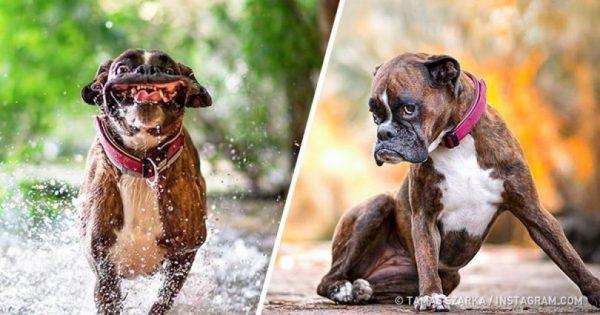 Αυτή είναι η σκυλίστα με τις 1000+1 γκριμάτσες που κάνει πάταγο στο Instagram. Δείτε τις εκπληκτικές φωτογραφίες της!