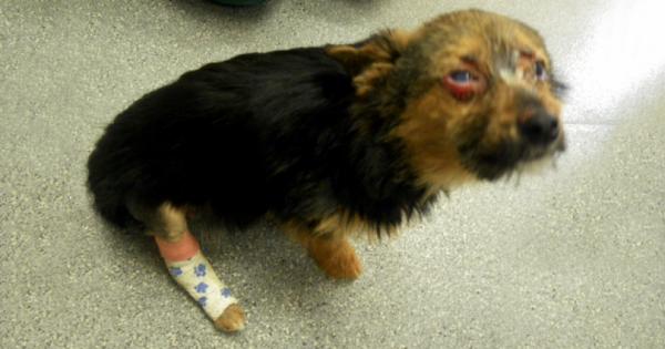 Θυμάστε το σκυλάκι που κάποια αρρωστημένα μυαλά του έσπασαν τα πόδια και το έβαλαν φωτιά; Δείτε ΠΩΣ είναι και τι κάνει σήμερα!