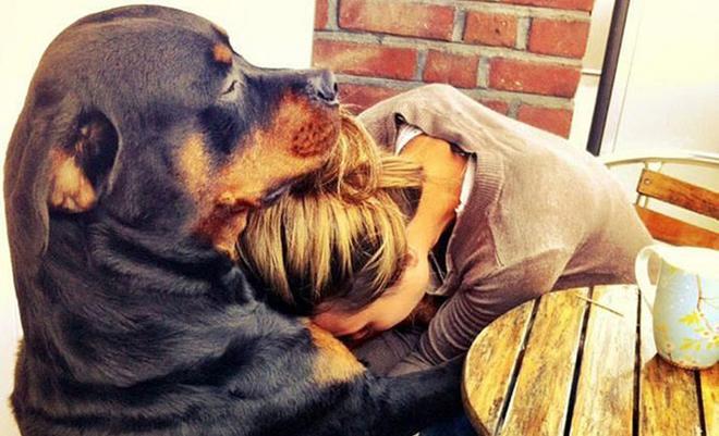 ωκυτοκίνη Σκύλος μάτια αγκαλιά