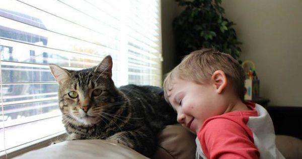 Μάθετε να επικοινωνείτε με τη γάτα σας