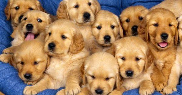 Τα δημοφιλέστερα ονόματα σκύλων για το 2016 σύμφωνα