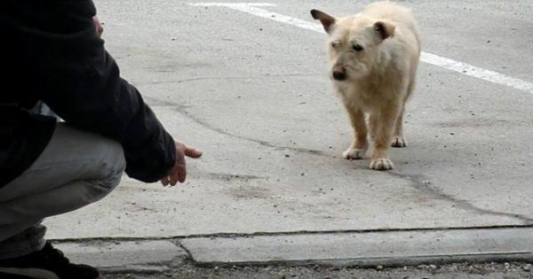 Αυτός ο σκύλος ζούσε μόνος και τρομαγμένος μέχρι που γνώρισε την αγάπη…