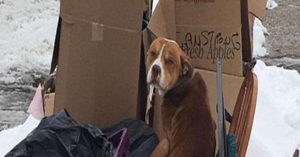 Εγκατέλειψαν τον σκύλο τους στο χιόνι λόγω… μετακόμισης