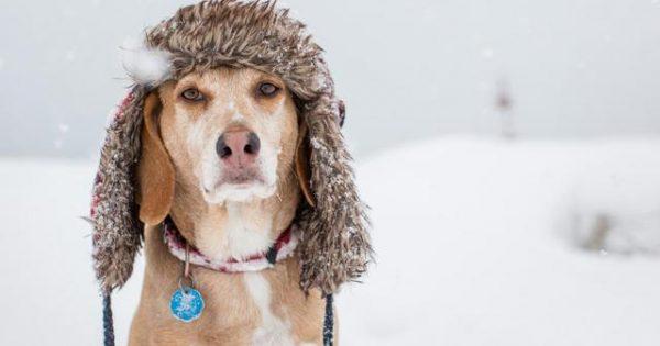 Ο σκύλος σου κρυώνει όσο κι εσύ! Προστάτεψε τον!