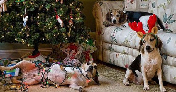 Τα Χριστούγεννα έρχονται και φέρνουν κινδύνους για τον σκύλο μας!