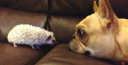 Βίντεο: Όταν οι σκύλοι συναντούν άλλα ζώα