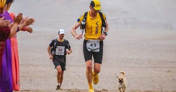 Αδέσποτος σκύλος τρέχει 250 χιλιόμετρα και τερματίζει μαζί με τον νέο του πατέρα!