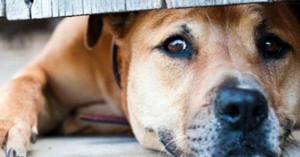 Κτηνωδία! Άνδρας βίαζε γέρικη σκυλίτσα μπροστά στα μάτια των περιοίκων