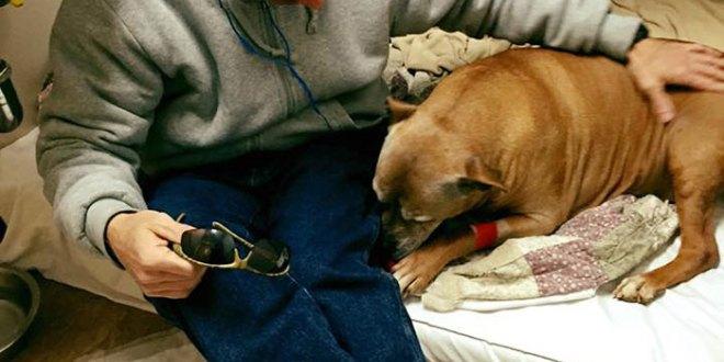 άστεγος αδέσποτο σκυλί