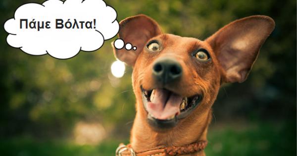 «Πάμε βόλτα;». Δύο μαγικές λέξεις που κάνουν τον σκύλο μας ευτυχισμένο