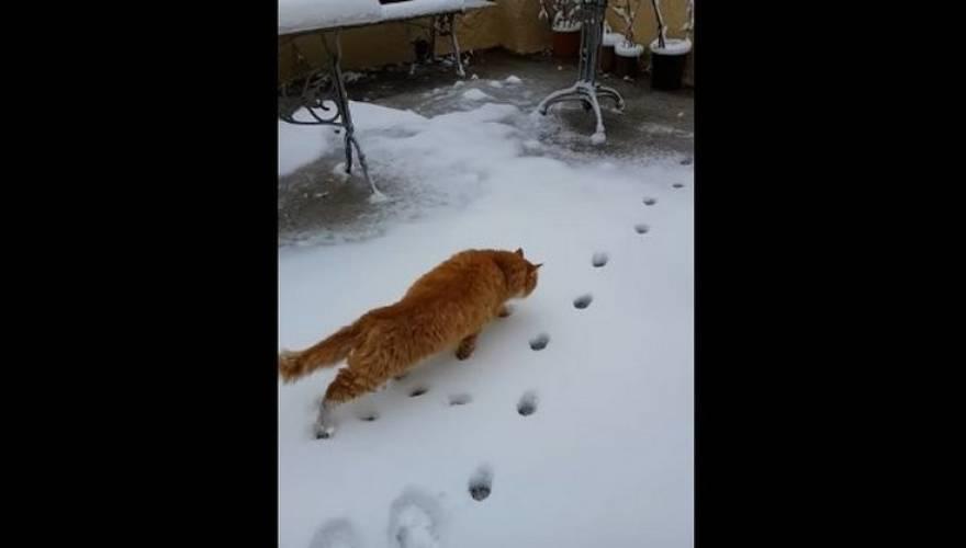 χιόνι Λέσβος Γάτα