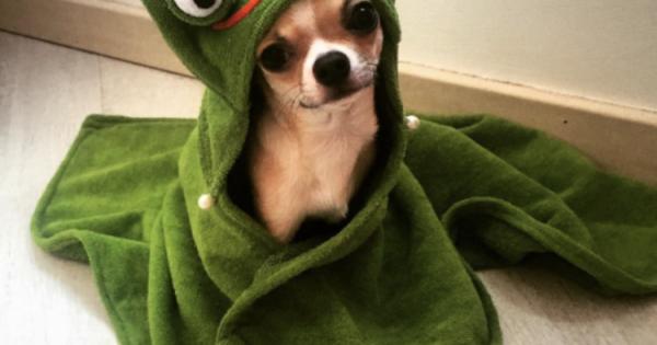 Γιατί ο σκύλος σου κάνει σαν «τρελός» μετά το μπάνιο;