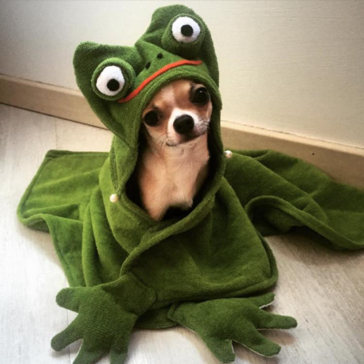 Σκύλος μπάνιο