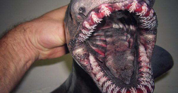 Ένας ψαράς φωτογράφισε πλάσματα σπάνια, παράξενα, τρομακτικά και αλλόκοτα που ζουν στα πιο ανεξερεύνητα μέρη των ωκεανών