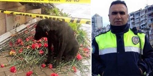 Τουρκία: Αδέσποτος σκύλος που φρόντιζε αστυνομικός που σκοτώθηκε στη Σμύρνη τον περιμένει στο σημείο του θανάτου του