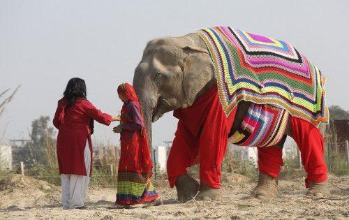 Γυναίκες ενός χωριού στην Ινδία έφτιαξαν τεράστιες, πλεκτές πιτζάμες για να μην κρυώνουν οι ελέφαντες