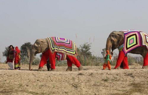 Ινδία ελέφαντες