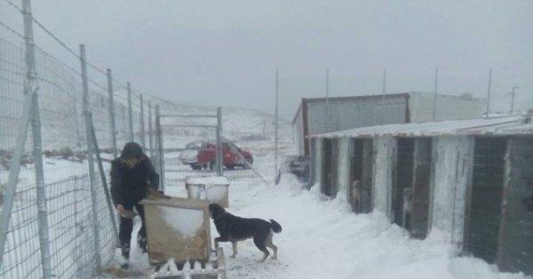 Με τη βοήθεια της Πυροσβεστικής Υπηρεσίας Λήμνου κατάφεραν να φροντίσουν τους σκύλους στο δημοτικό κυνοκομείο