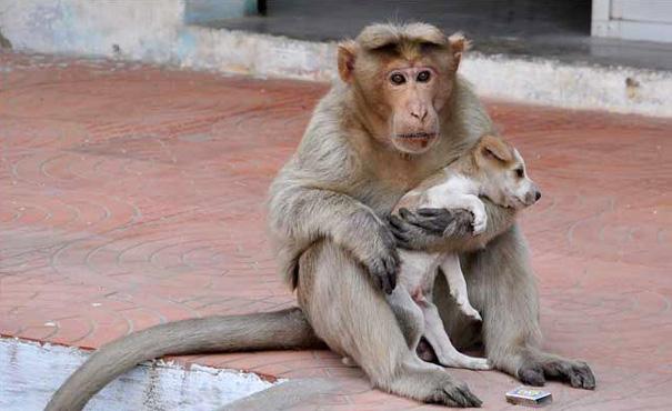 μαϊμού κουταβάκι