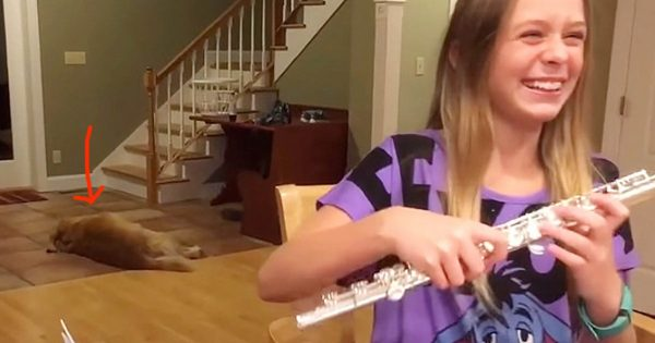 16χρονη Κοπέλα προσπαθεί να Μάθει Φλάουτο. Δείτε όμως ΤΙ κάνει ο Σκύλος στο Βάθος και θα Τρίβετε τα Μάτια σας!