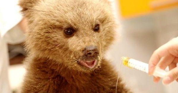 Το πρώτο αρκουδάκι στον κόσμο που περπατάει με αμαξίδιο χάρη στον Αρκτούρο ζητάει κάτι από τον Άγιο Βασίλη