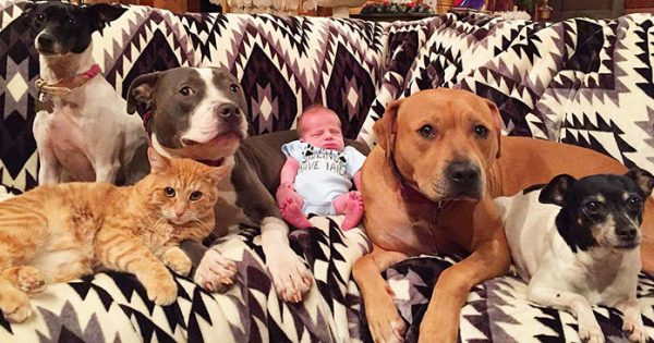 Οικογένεια ζώων αγαπά τόσο πολύ τον μικρό της αδερφό που τον ακολουθεί παντού