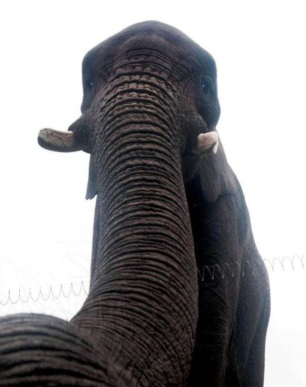 ζώα selfie