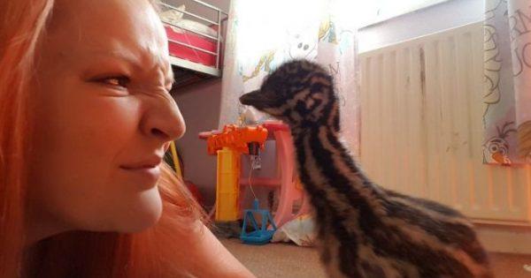 Αγόρασε ένα αυγό από το ίντερνετ με 30 ευρώ και τώρα έχει ένα εξωτικό πουλί.