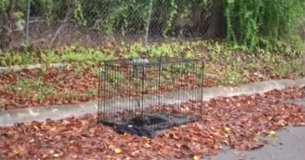 Είδαν ένα νεκρό Σκυλί μέσα σε Κλουβί στην άκρη του Δρόμου. Μόλις όμως Πλησίασαν πιο Κοντά, Πάγωσαν!