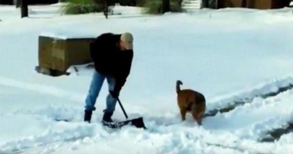 Άντρας Καθαρίζει την Αυλή του από το Χιόνι. Δείτε ΤΙ κάνει ο Σκύλος του για να τον Βοηθήσει και θα Λιώσετε!