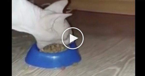 Έβαλε στην Γάτα του να Φάει αλλά μόλις αυτή άνοιξε το Στόμα… Δείτε και θα Πάθετε Πλάκα!