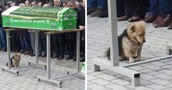 ΤΡΑΓΙΚΟ: Συντετριμμένος Σκύλος επισκέπτεται Καθημερινά τον Τάφο του Καλύτερού του Φίλου που Πέθανε Πρόσφατα