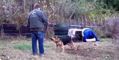 Συγκινητικό βίντεο: Η απελευθέρωση ενός σκύλου που ήταν αλυσοδεμένος για μια ζωή
