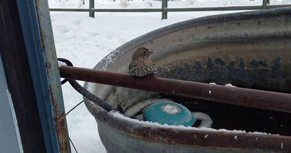 Άνδρας δίνει κυριολεκτικά ανάσα ζωής σε ένα πουλάκι που είχε παγώσει πάνω σε μεταλλικό φράχτη (Video)