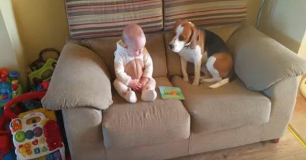 Έβαλαν το νεογέννητο μωρό να κάτσει για πρώτη φορά δίπλα στο σκύλο. Οι αντιδράσεις τους; Θα σας φτιάξουν τη μέρα!