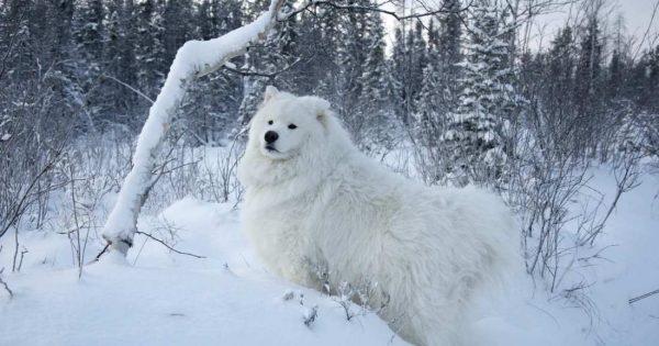 Σκύλος στο κρύο και στο χιόνι; Δείτε πώς να τον προστατεύσετε!