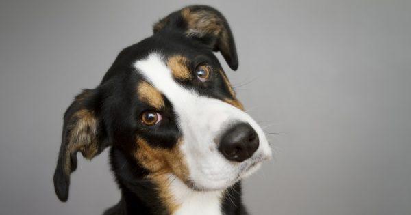 Βίντεο: Η αντίδραση του σκύλου που μένει μόνος στο σπίτι ίσως σε κάνει να δακρύσεις