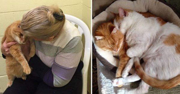 Υιοθέτησε μία γάτα από καταφύγιο ζώων. Ένα μήνα μετά, γύρισε πίσω και έκανε το αδιανόητο!