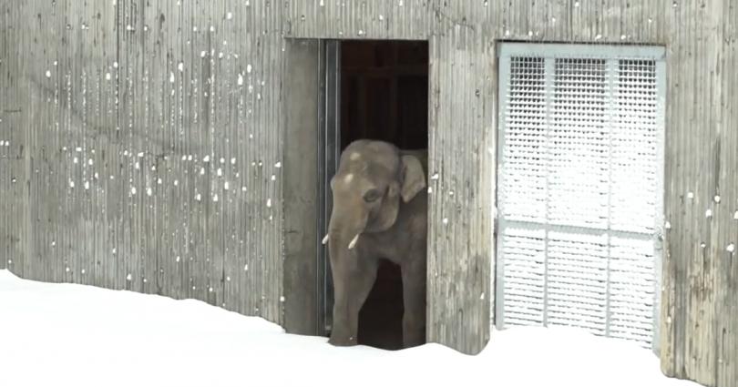 ζωολογικό κήπο