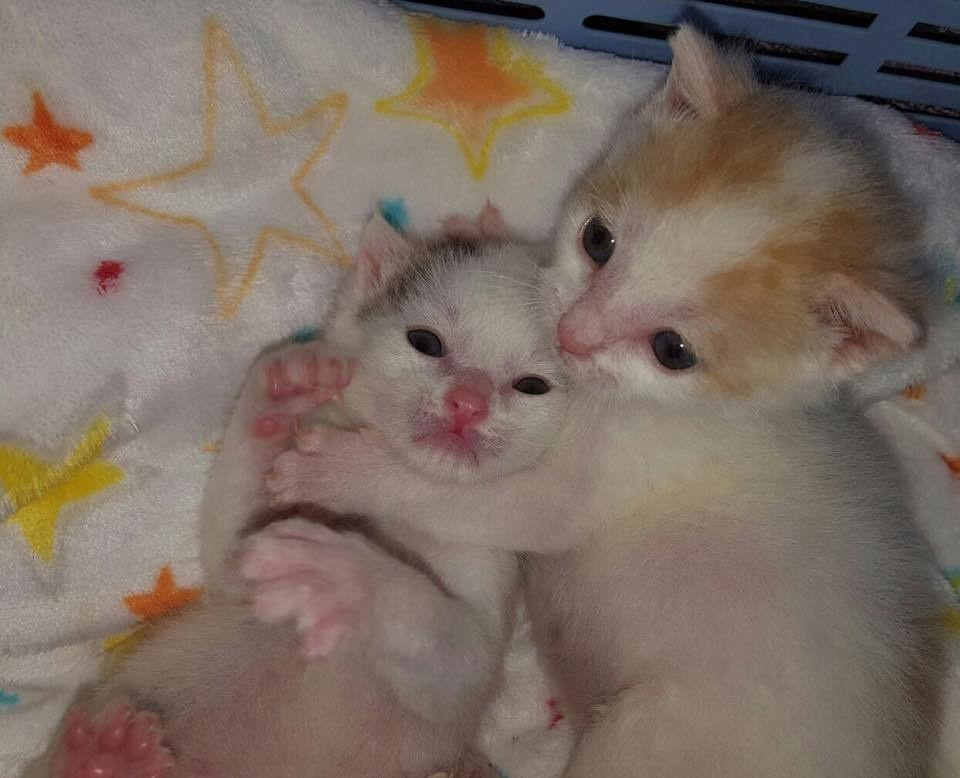 υιοθεσία ζώων γατάκια