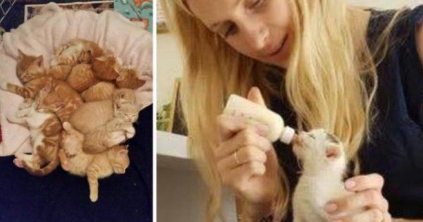 8 ορφανά γατάκια βρέθηκαν τρομαγμένα και πεινασμένα αλλά η ζωή τους χρωστούσε μια δεύτερη ευκαιρία