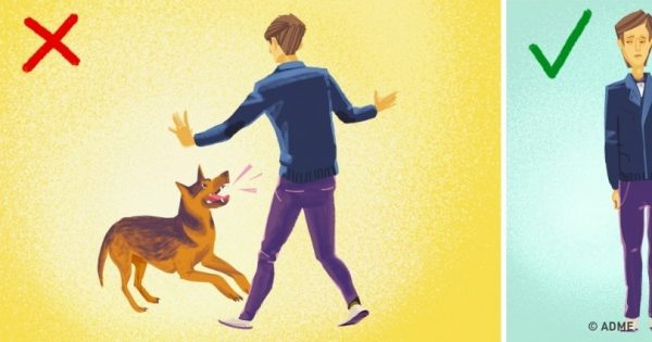 Δείτε τι πρέπει να κάνετε αν σας επιτεθούν άγρια σκυλιά στο δρόμο!