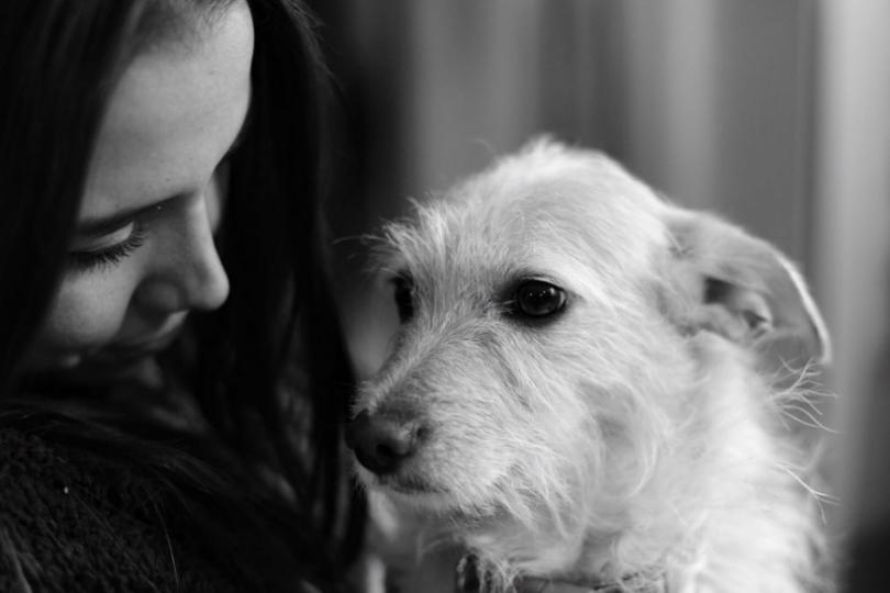Σκύλος αγάπη