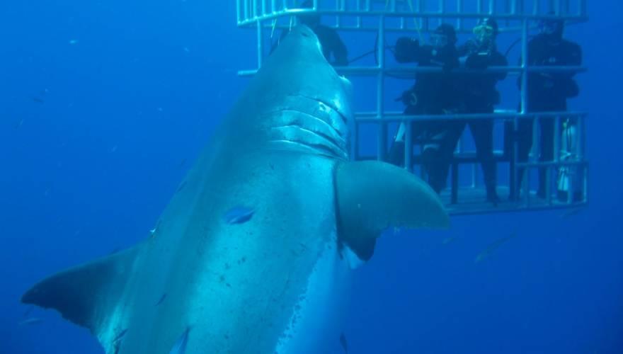 καρχαρίας Βίντεο