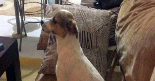Αυτός ο σκυλάκος βλέπει ταινία τρόμου – Η αντίδρασή του στην επίμαχη σκηνή… ανεπανάληπτη (βίντεο)