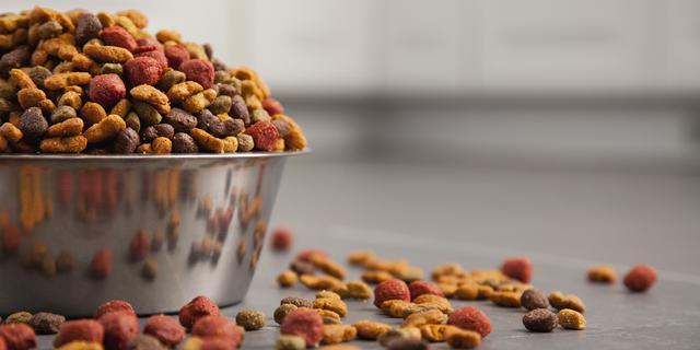 USA, Illinois, Metamora, Close-up of bowl full of dog food