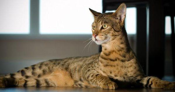 Δείτε ένα καταπληκτικό ντοκιμαντέρ για τον θαυμαστό κόσμο της γάτας
