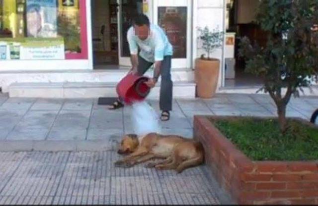κακοποίηση σκύλων Βίντεο Αδέσποτα