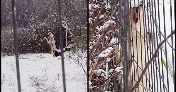 Σοκ – Άφησε τον σκύλο του να παγώσει και να πεθάνει από το δριμύ ψύχος