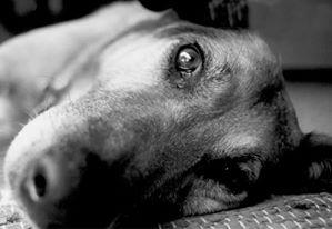 Όσα πρέπει να γνωρίζουμε ότι ισχύουν με το νόμο για τα ζώα συντροφιάς
